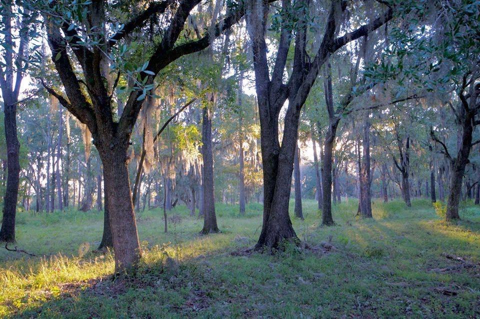 1743 Twickenham Plantation For Sale In Yemassee South Carolina